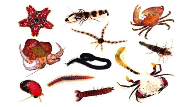 6800 Gambar Hewan Invertebrata Dari Plastisin HD