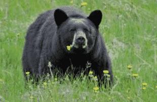 5800 Koleksi Gambar-gambar Hewan Herbivora Terbaik