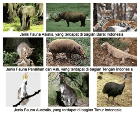 74 Gambar Hewan Tipe Australia HD Terbaru