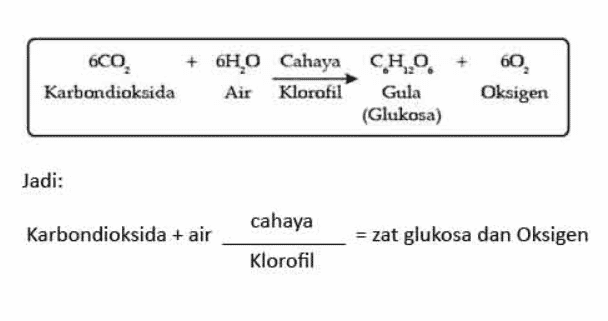 Tabel Rumus Fotosintesis Tumbuhan