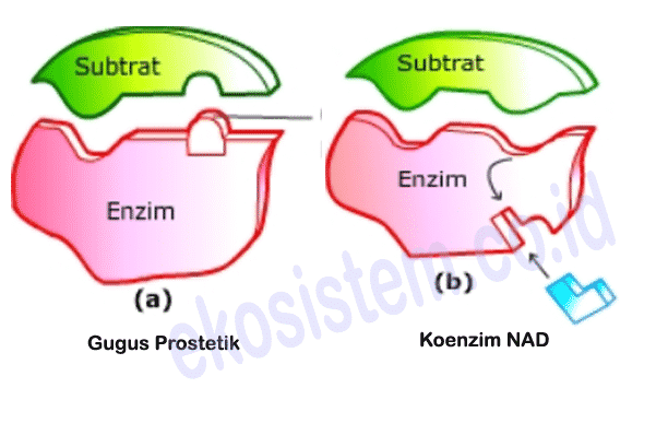komponen enzim