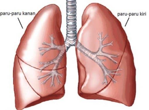45++ Organ pencernaan pada hewan ruminansia beserta fungsinya terupdate