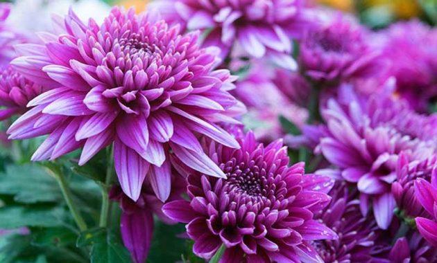 Struktur Bunga Fungsi Dan Gambarnya