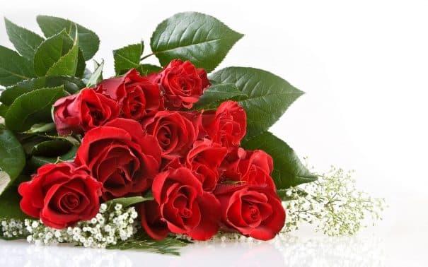 Bunga Mawar Cara Teknik Menanam Dan Merawatnya