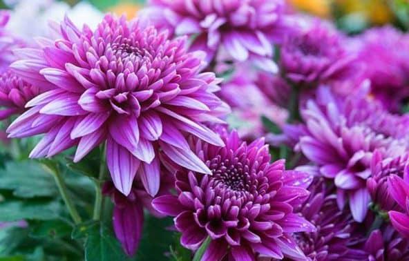 72+ Gambar Bunga Dan Fungsinya Paling Bagus