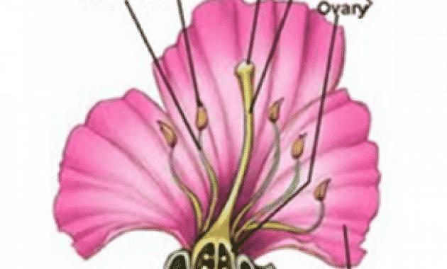Download 43+ Gambar Bunga Tidak Sempurna Beserta Penjelasannya Paling Keren