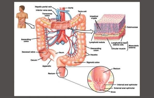 Anatomi Tubuh Manusia Bagian Beserta Fungsi Dan Gambarnya