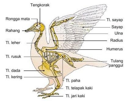 510 Koleksi Gambar Hewan Vertebrata Beserta Organ Gerak Dan Fungsinya Gratis