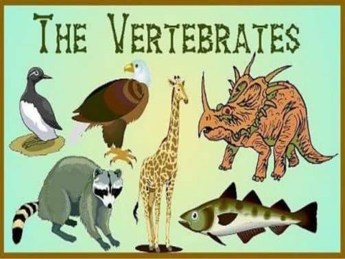 100+ Gambar Organ Gerak Pada Hewan Vertebrata Terbaik