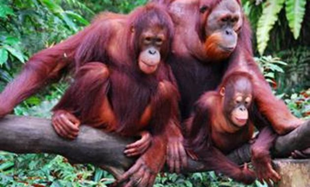 100 hewan langka di dunia