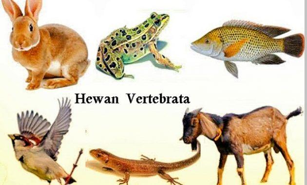 Hewan Vertebrata Ciri Ciri Gambar Beserta Penjelasanya