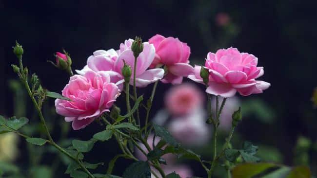 fungsi-tangkai-bunga
