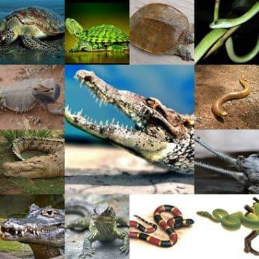 40+ Contoh hewan fragmentasi brainly terupdate