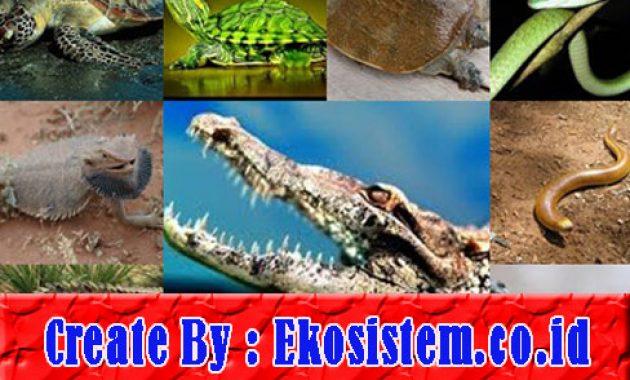 ciri ciri ordo crocodilia ditunjukkan oleh nomor