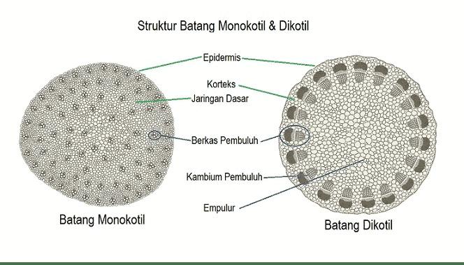 Gambar Mikroskop Dan Keterangannya 2021