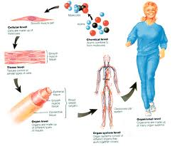 Homeostasis Adalah - Fungsi, Komponen, Faktor Yang ...