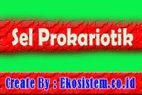 Sel Prokariotik