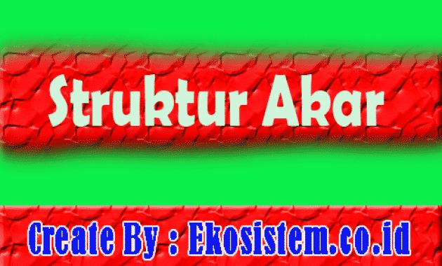 Struktur Akar