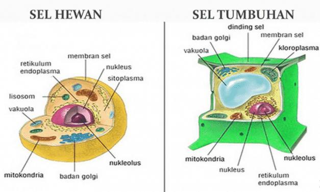 gambar sel hewan dan sel tumbuhan