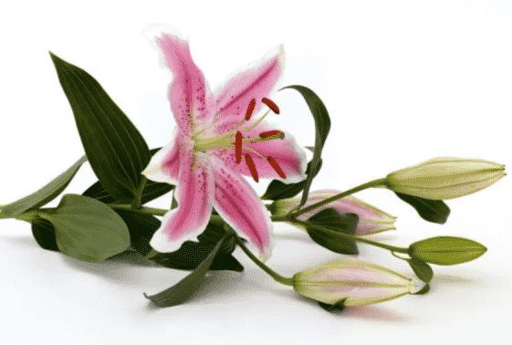 bagian bunga